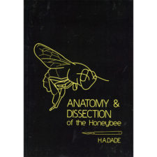 anatomy-disection-of-the-honeybee-dade
