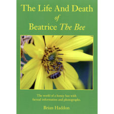 the-life-and-death-of-beatrice-the-bee-haddon
